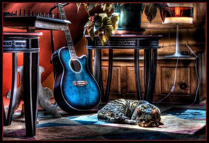 cat & guitar